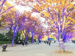 青の洞窟 SHIBUYA・代々木公園ケヤキ並木の昼の光景