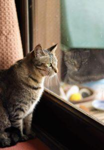 CAT(猫)/2019年5月1日/撮影:SHUN ONLINE