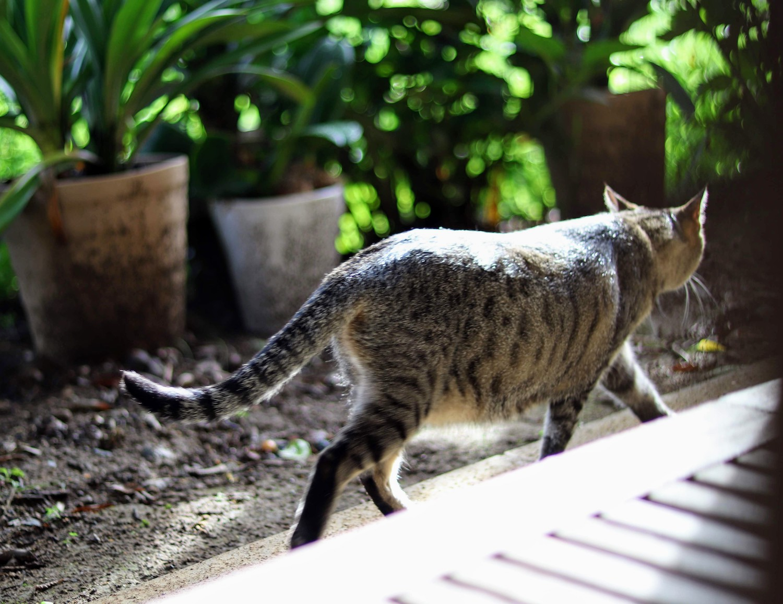 CAT(ネコ):photo by SHUN ONLINE