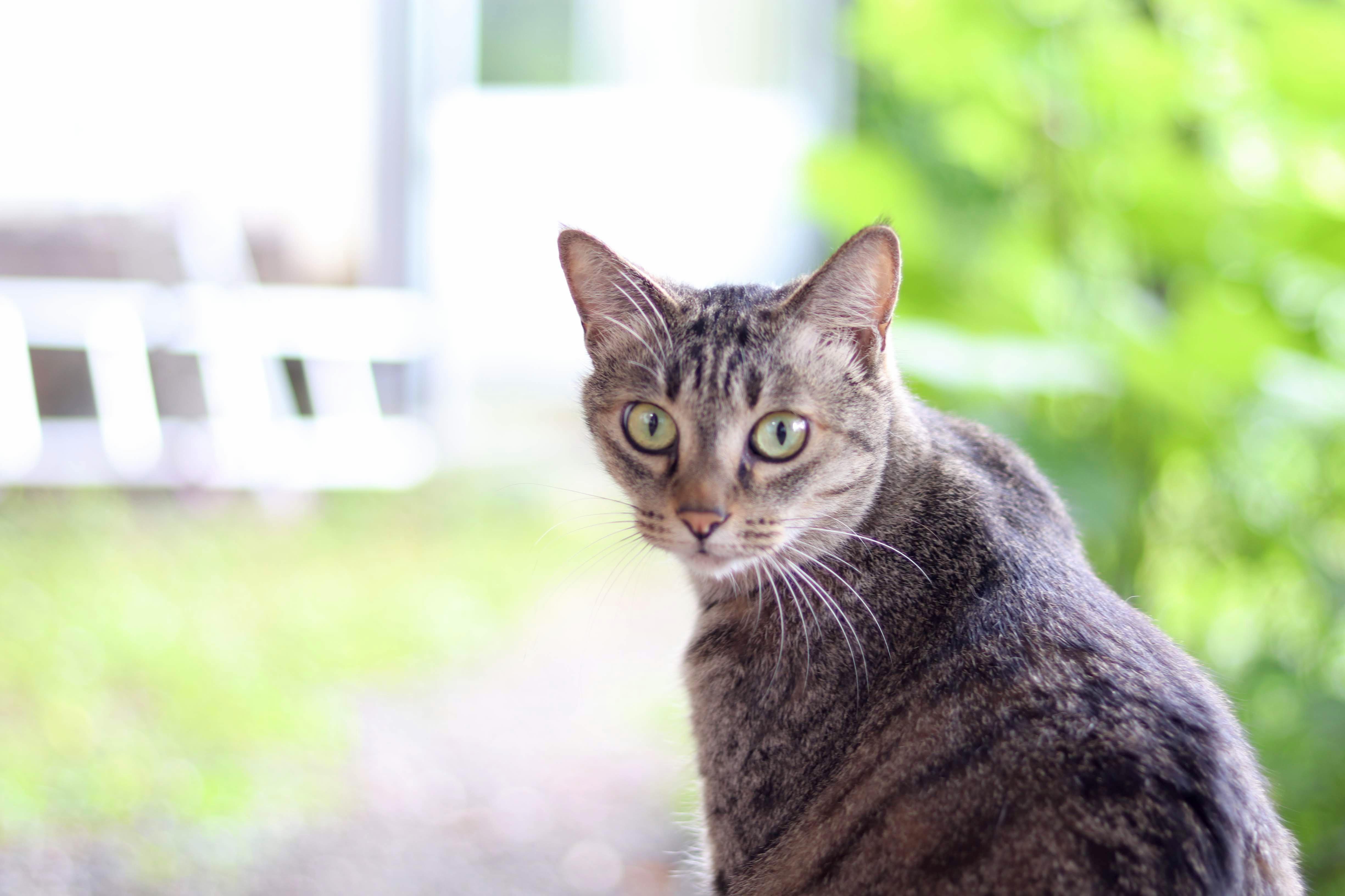 CAT(ネコ):photo by SHUN ONLINE(2019年8月14日)