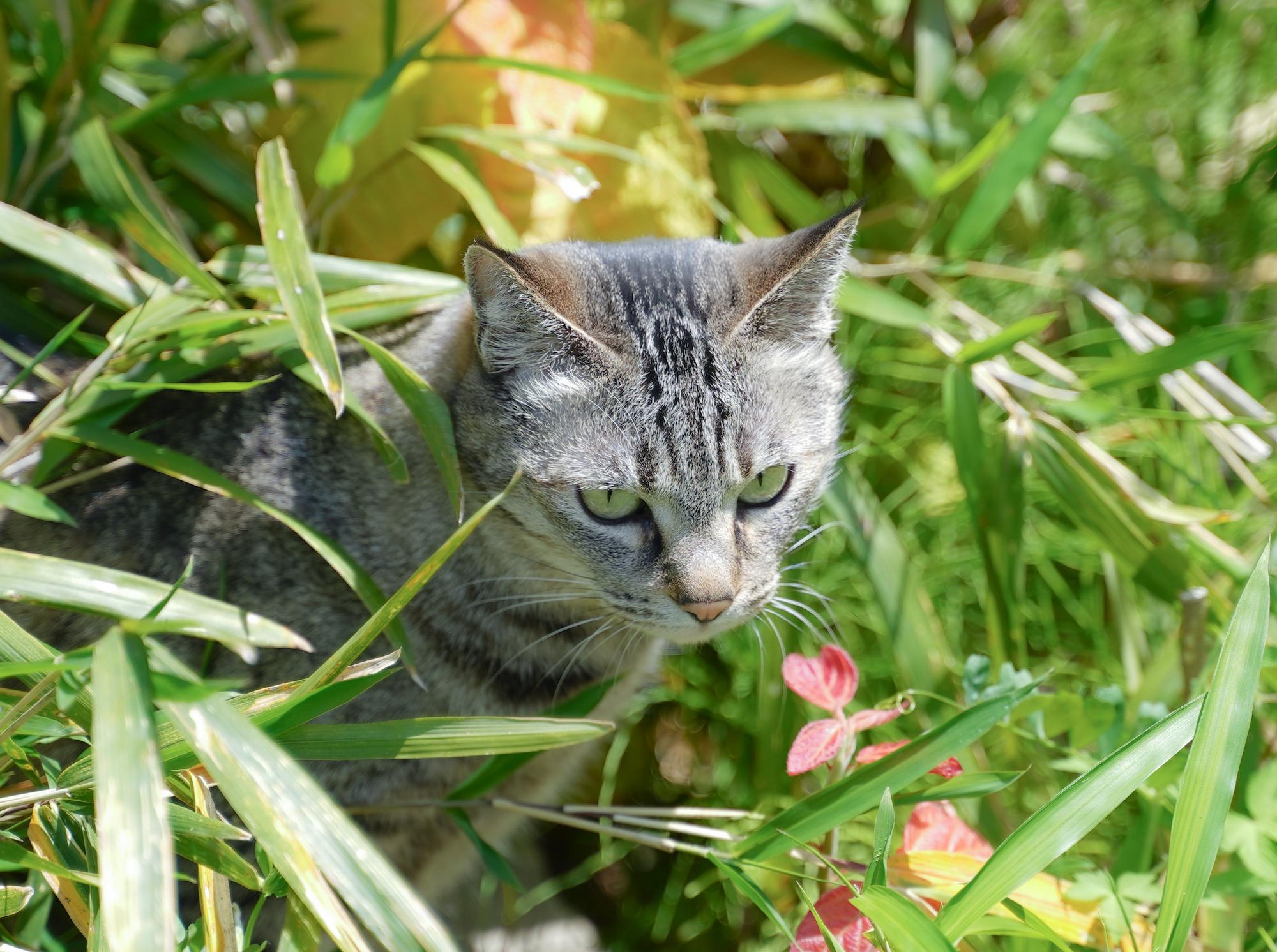 CAT/撮影:SHUN ONLINE. 2020年5月5日