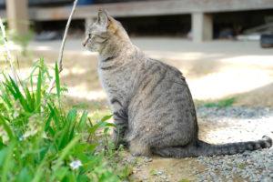 CAT(猫)/撮影(CAMERA MAN):SHUN ONLINE(樺澤俊悟)2020年5月5日