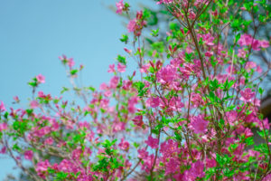 FLOWERS/撮影(CAMERA MAN):SHUN ONLINE(樺澤俊悟)2020年5月5日