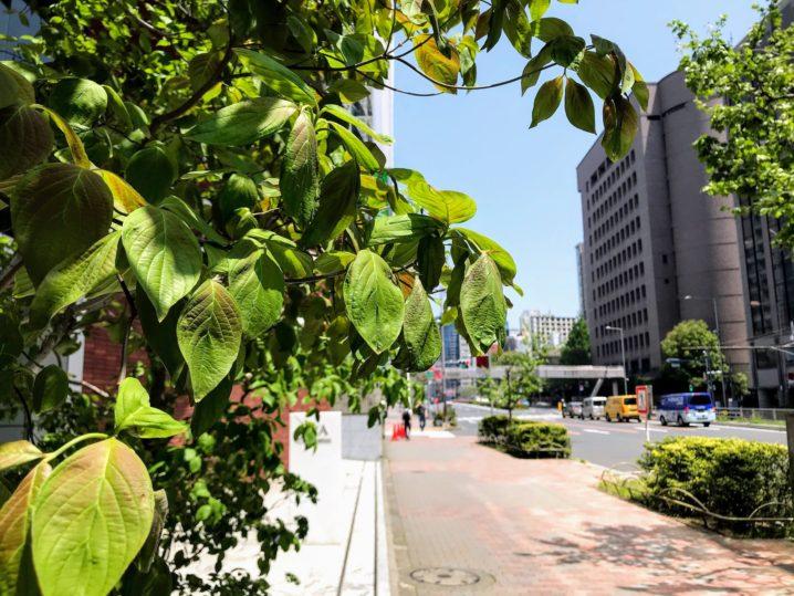 青山通りの緑