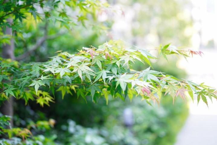 植物の葉。緑