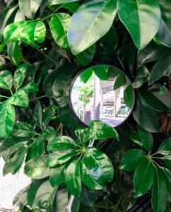 新緑(葉)と鏡