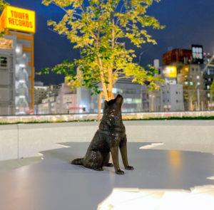 ハチの宇宙 in MIYASHITA PARK/2020年7月30日/撮影:SHUN