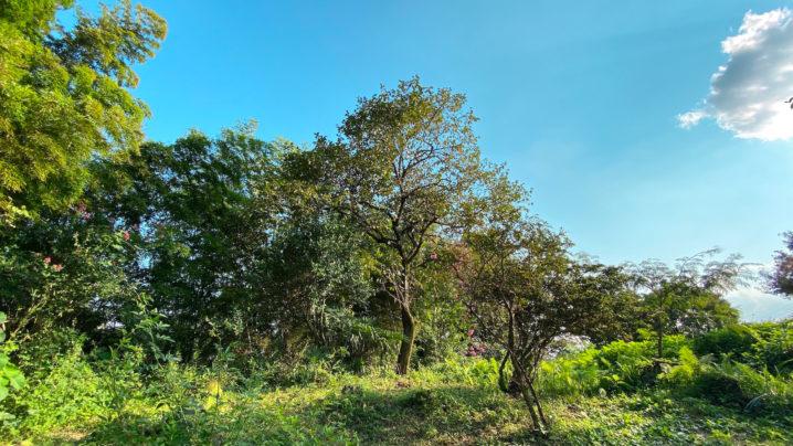 新緑と青い空