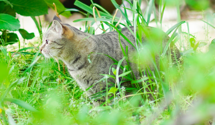 お庭のネコ(2021年5月/撮影:SHUN)