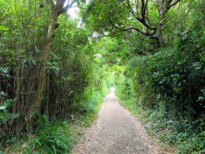 城ヶ島公園の遊歩道