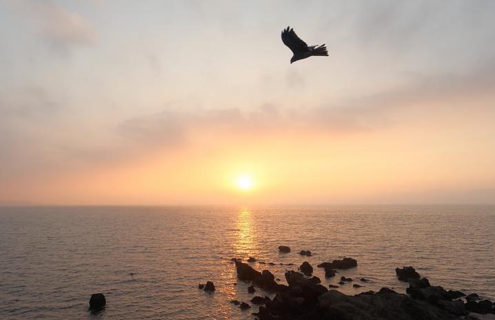 朝陽 & 鳥 in 三浦海岸の海。朝焼け