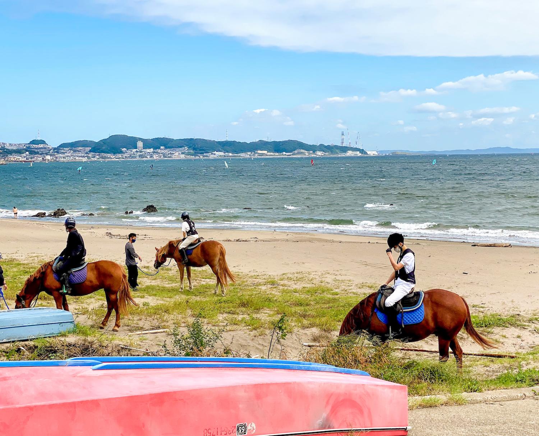 馬 in 三浦海岸